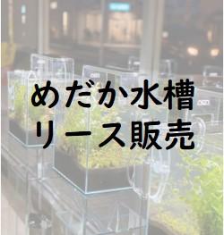 尼崎市の就労継続支援B型 めだか水槽リース販売